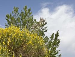 Relais Parco del Subasio | Agriturismo Assisi - Gallery 40