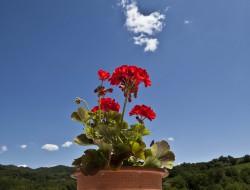 Relais Parco del Subasio | Agriturismo Assisi - Gallery 62