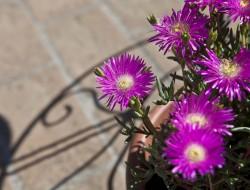 Relais Parco del Subasio | Agriturismo Assisi - Residenza Spoleto - Gallery 12